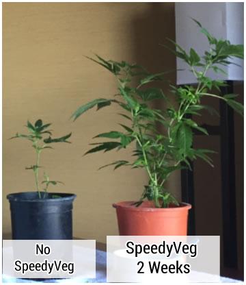 Growing Tips | SpeedyVeg™ | Organic Growth Accelerator